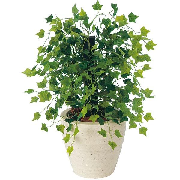 何気なく買ってきたキュートな観葉植物!でも名前がわからない!のサムネイル画像