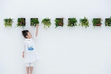 スペースがなくてもOK!壁掛け観葉植物で癒し空間はじめませんか?のサムネイル画像
