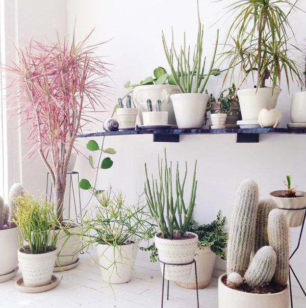 観葉植物の種類を知って身の回りを観葉植でいっぱいにしよう!のサムネイル画像