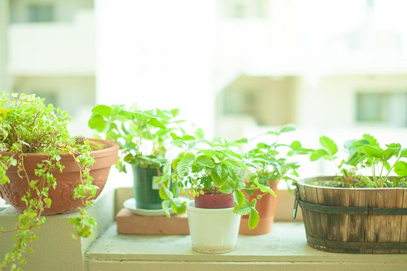 観葉植物があるおしゃれな空間☆インテリアグリーンの画像を見るのサムネイル画像