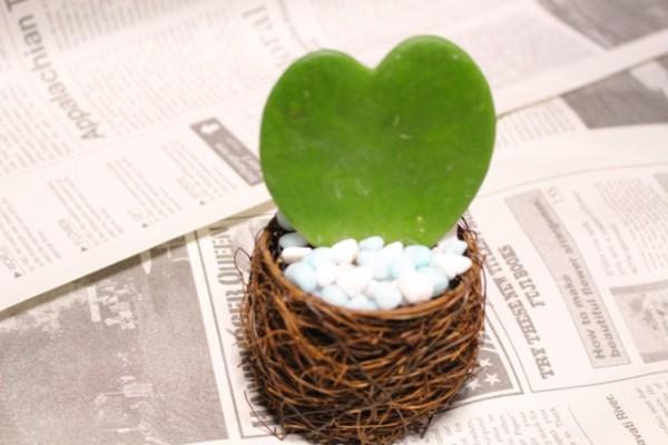 お洒落に飾って運気もアップ!観葉植物の風水的活用法まとめのサムネイル画像