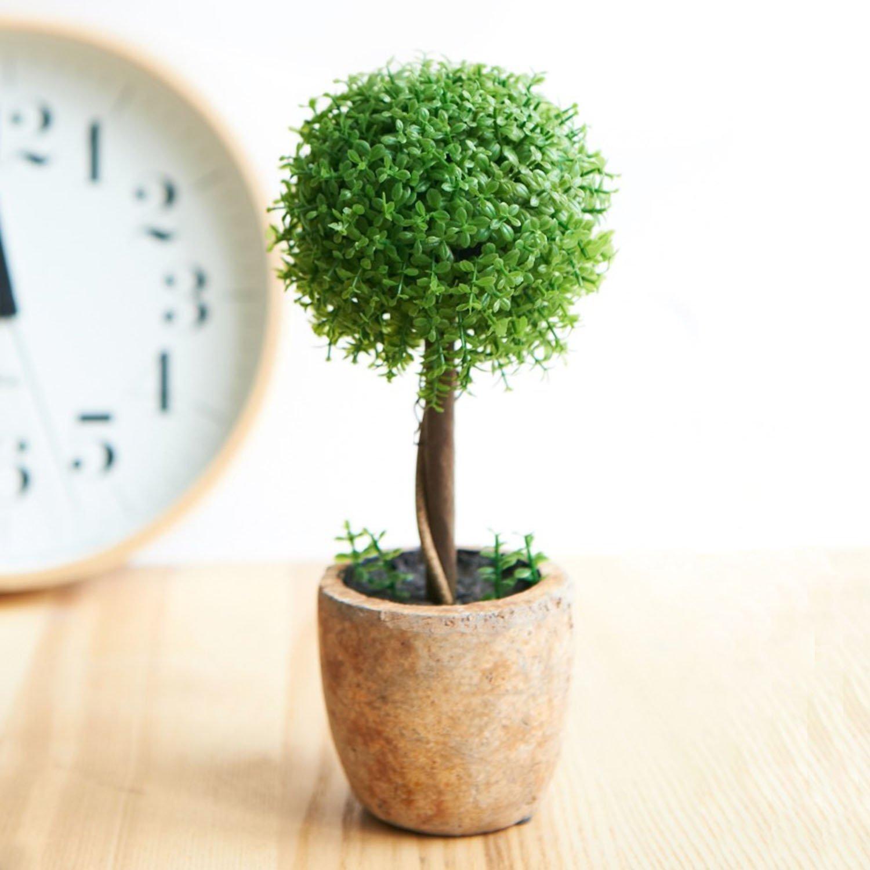 【観葉植物のある家って素敵です♪観葉植物を写真でご紹介します。】のサムネイル画像