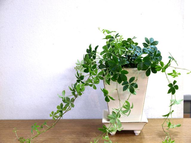さあ、どうする?☆観葉植物についてしまった虫の対処法と予防法!のサムネイル画像