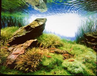 ada の水槽でネイチャーアクアリウムに挑戦してみませんか♪のサムネイル画像