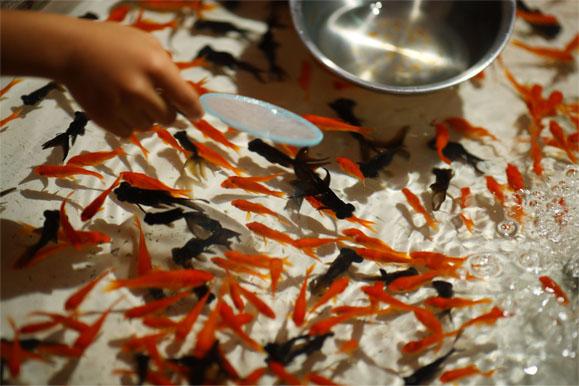 意外と知られていない?金魚すくいの金魚を長生きさせる正しい飼い方のサムネイル画像