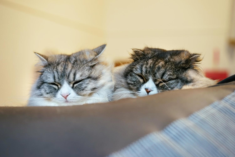 猫好きにはたまらない♡まいにち持ち歩きたい猫のイヤホンジャック♪のサムネイル画像