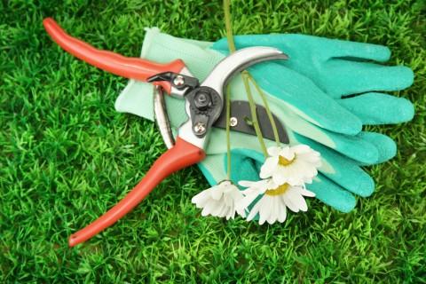 挿し芽の方法を知れば春がくるのが待ち遠しくなる♡【初心者も簡単】のサムネイル画像