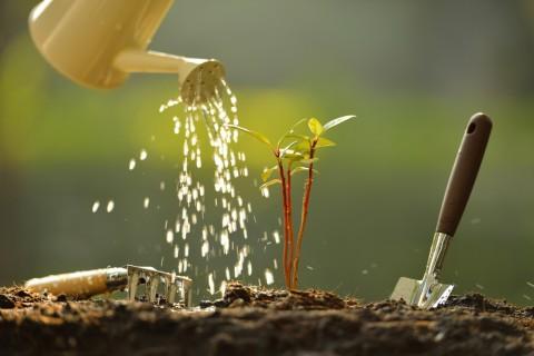 水やりのポイントさえ掴めば観葉植物があなたのインテリアの主役に♡のサムネイル画像