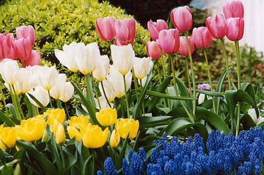 園芸鉢は多種多様!用途によって使い分け更に園芸を楽しもう。のサムネイル画像