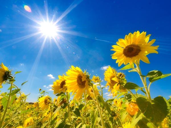 【夏の救世主!】扇風機とサーキュレーターの違いってなんなの!?のサムネイル画像