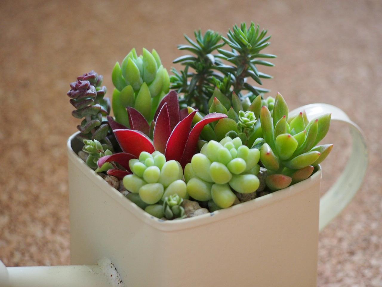 え?ホント?100均ショップで揃う!癒し系インテリア多肉植物の鉢植のサムネイル画像