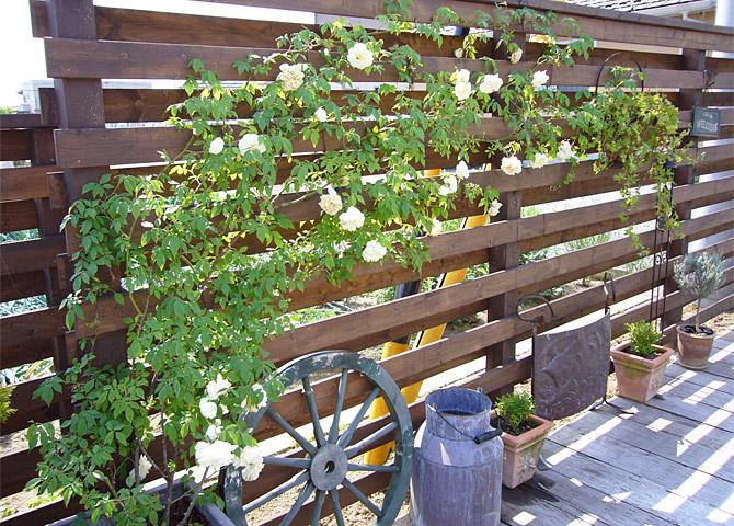素敵にアレンジしていきましょう。庭ガーデンの楽しみ方編。のサムネイル画像