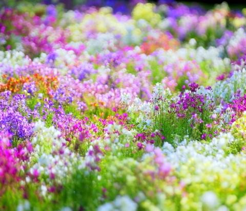 4月にはどんな花が咲いているの?4月に咲いているお花まとめ!のサムネイル画像