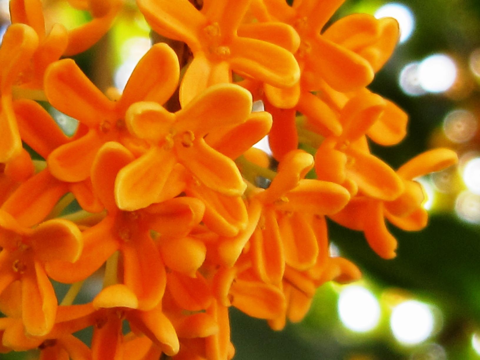 秋の10月は花咲く季節!10月の人気の花を知って花博士になろう!のサムネイル画像