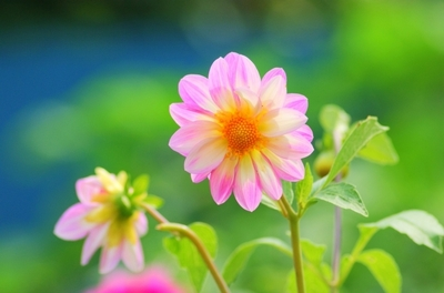 花ランキング発表!女性に人気の花をランキングにして紹介します!のサムネイル画像