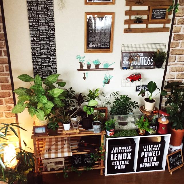 【癒し】育てやすい人気の観葉植物10選!【グリーンのある生活】のサムネイル画像