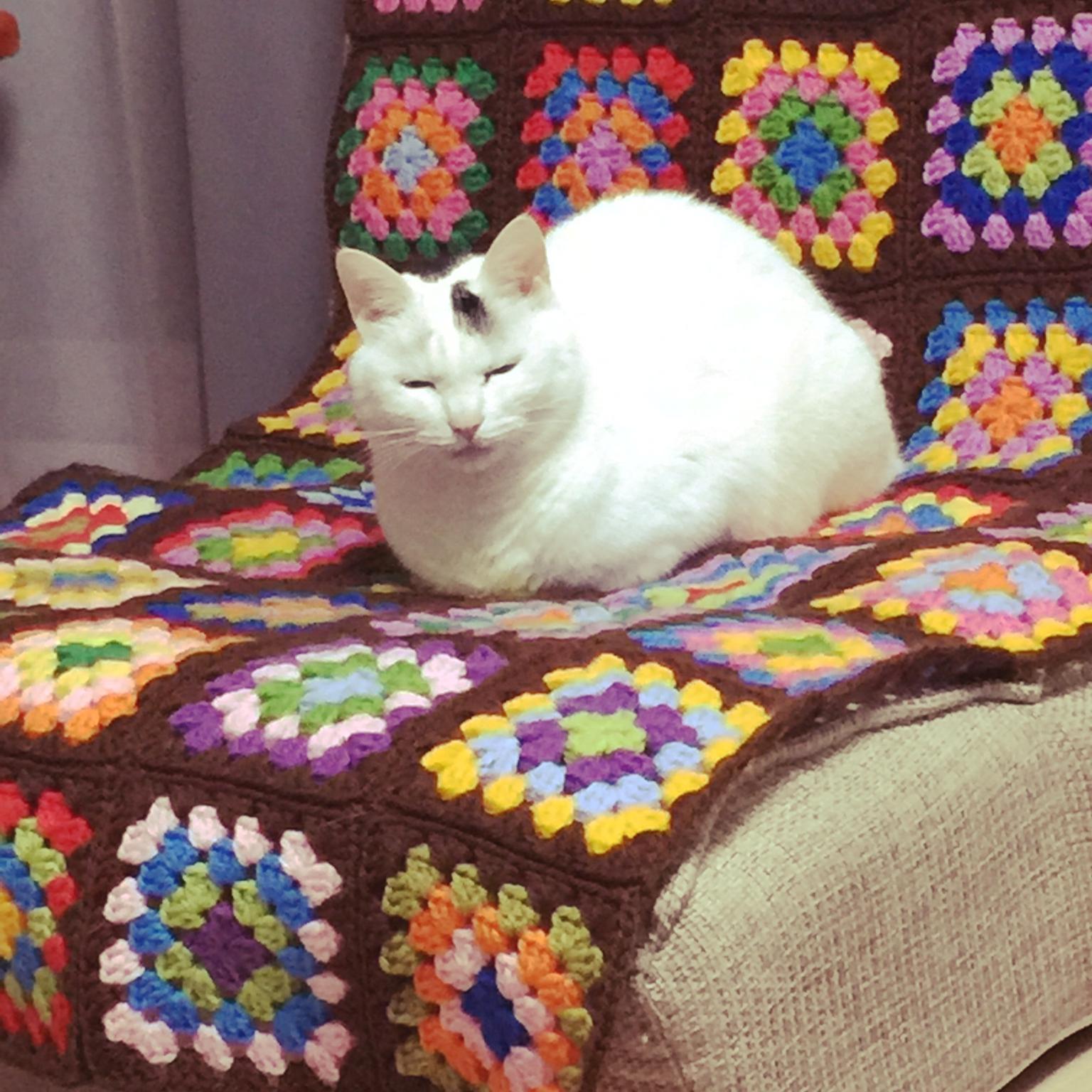ネコもうっとり!?座り心地サイコーな座椅子カバーの作り方☆のサムネイル画像