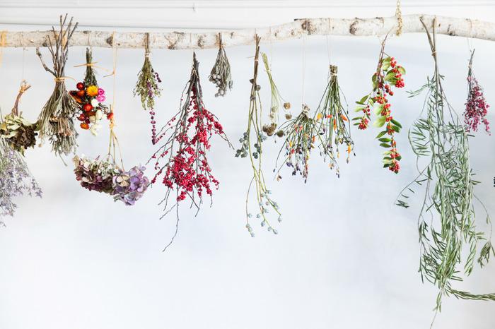 キレイな花をドライフラワーにして、自由にアレンジしてみようのサムネイル画像