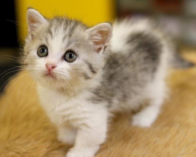 可愛い猫ちゃんのために!オリジナルのキャットウォークdiy特集!のサムネイル画像