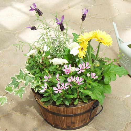 明るく、華やかに、彩りを!寄せ植えの作り方とコツを知りたいのサムネイル画像