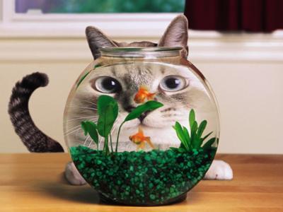 【金魚風水の魅力】愛らしい金魚が秘めた金運力で暮らしに潤いをのサムネイル画像
