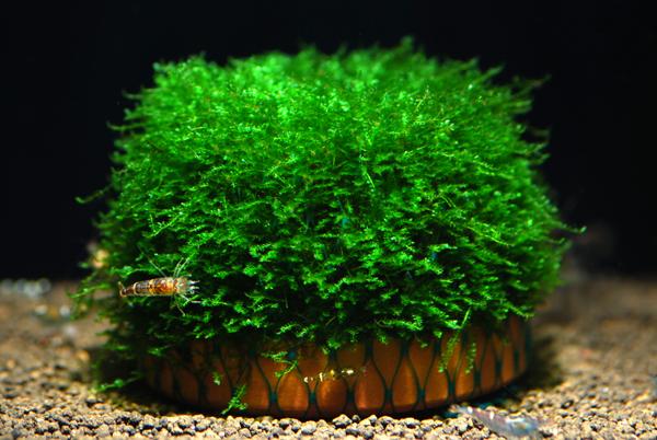 初心者でもかんたんレイアウト!丈夫で育てやすい水草についてのサムネイル画像