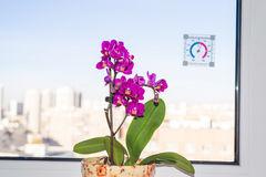 胡蝶蘭を長く楽しむ!植え替え時期とその方法、育て方のポイントのサムネイル画像