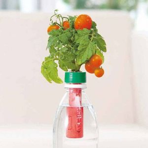 自宅で簡単にできる!ペットボトルで野菜やハーブを水耕栽培!|